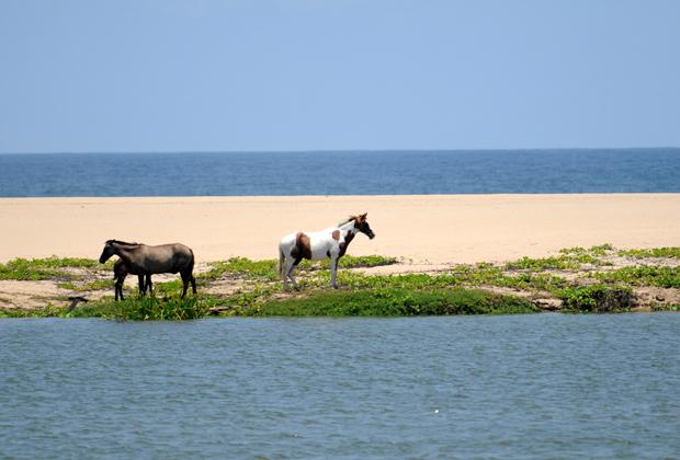 Hotel Desconocido Costa Alegre Luxury Accommodation Horseback Riding