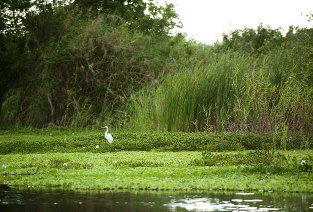 Hotel Desconocido Eco sustainable travel - pacific ocean nature reserve