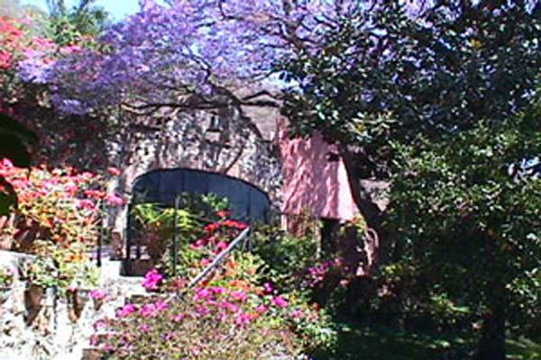 Villa Angel Ajijic B&B - Jacaranda Tree & Garden