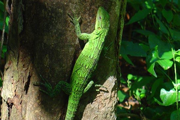 Xinalani - Puerto Vallarta area - Jungle yoga retreat wildlife
