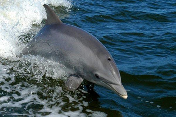 Xinalani - Puerto Vallarta area - dolphin experience