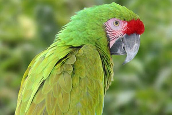Xinalani yoga retreat birdwatching mexico