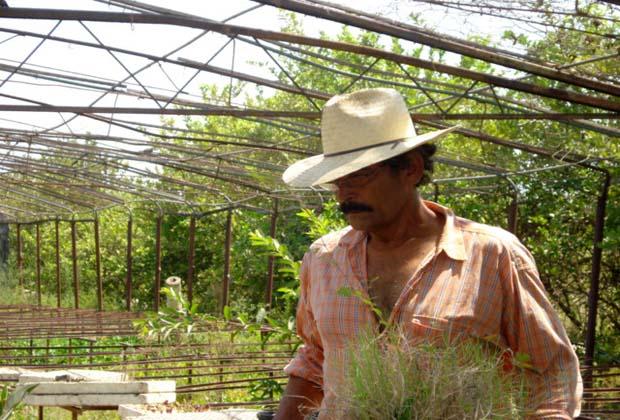 Owner-Farmer Manuel de Jesus Rancho el Limon Mexico
