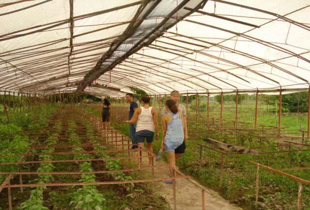 Rancho el Limon Bucerias Mexico Organic Farm Vacation