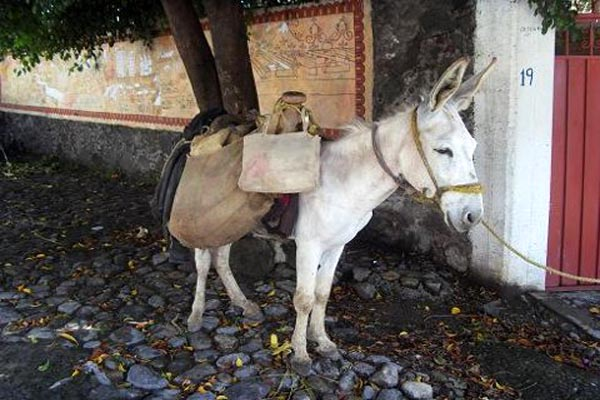 CICE LANETA Cuernevaca Mexico Donkey Burro