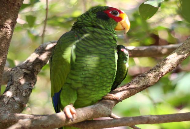 Genesis Ek Balam nature Eco-Cultural Retreat Bird Watching