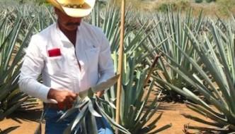 Clayton Szczech, 'Experience Tequila', Mexico 'Tequila Tourism' Group Excursions & Tours