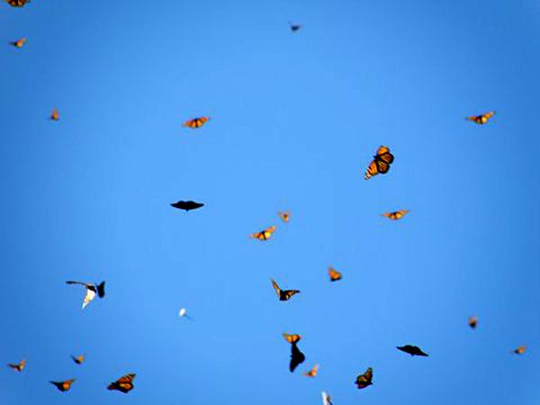 Blue Sky & Flutterflies - Henry Huber