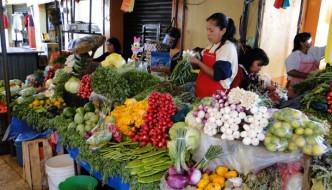 Experiencia Authentic Vacation Program, Tepoztlán, Morelos