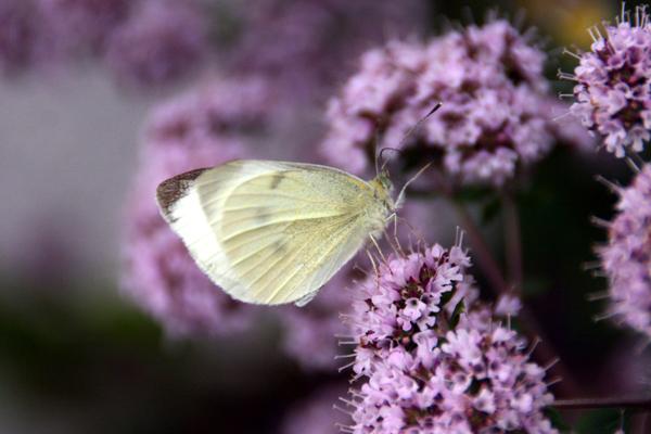 Butterfly Gallery 3 © Heather Hess