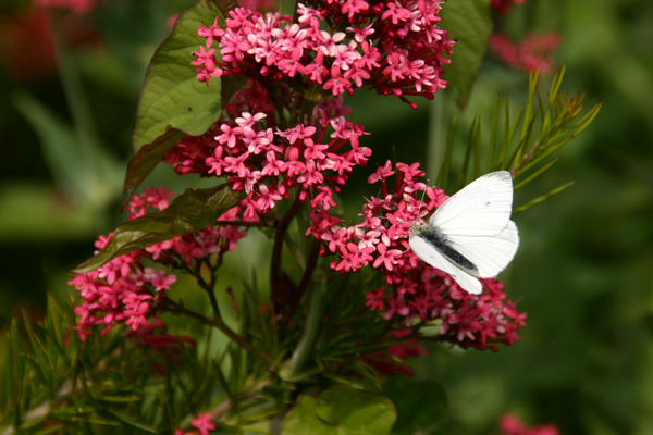 Butterfly Gallery 4 © Heather Hess