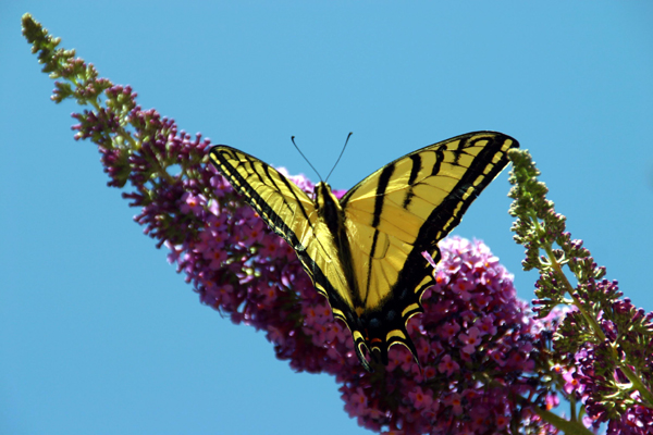 Butterfly Gallery 5 © Heather Hess