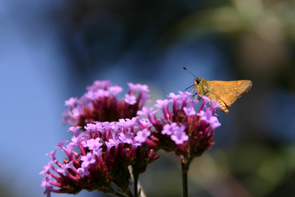 Butterfly Gallery 6 © Heather Hess