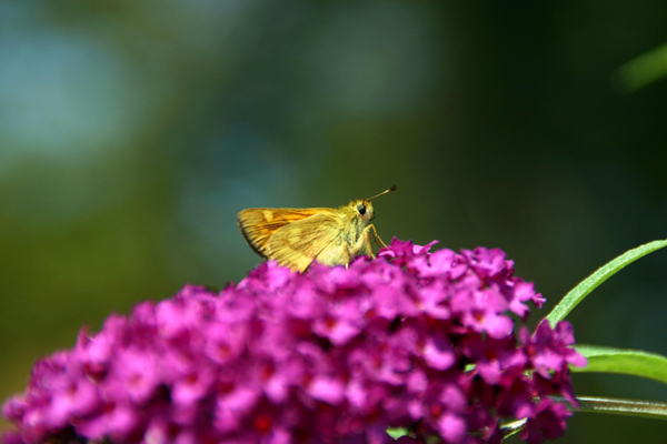 Butterfly Gallery 7 © Heather Hess