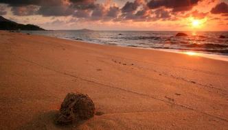 Haramara Yoga and Spirituality on the Beach